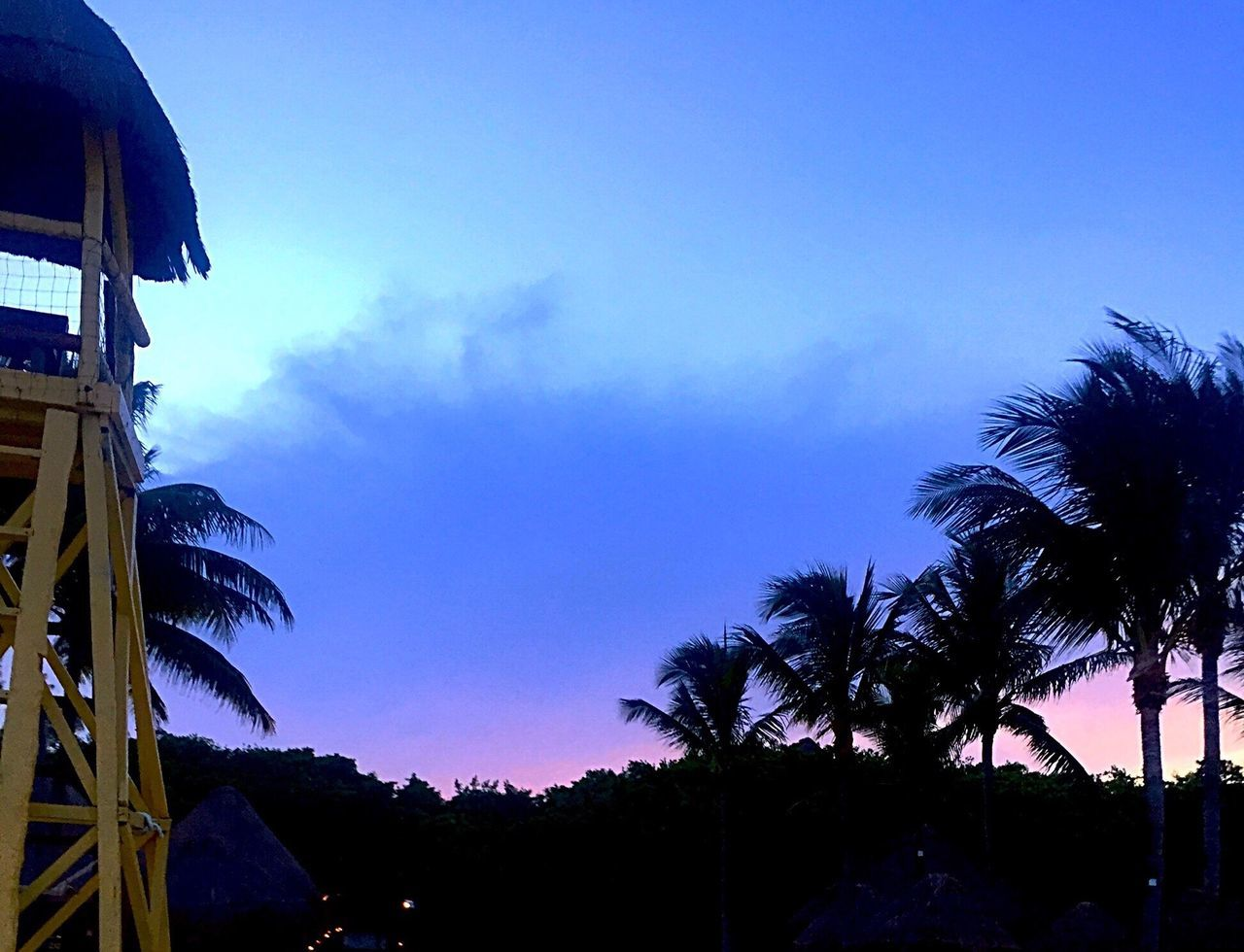 palm tree, tree, no people, sky, silhouette, beauty in nature, low angle view, nature, outdoors, scenics, tranquility, sunset, blue, architecture, built structure, growth, day, building exterior