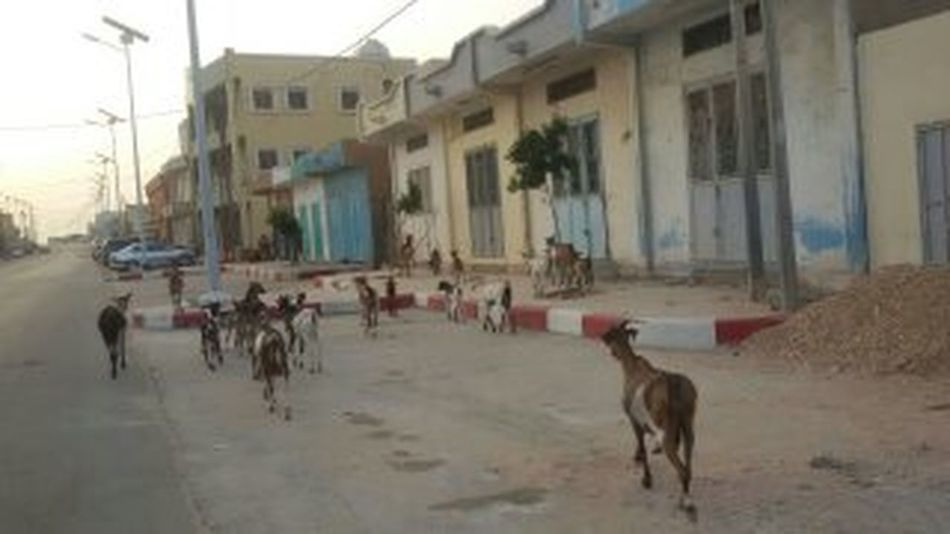 Boulevard Chevre  En Route Mauritanie