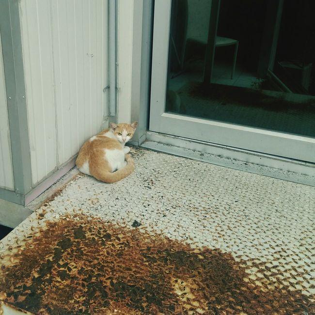 Door Animal Themes Pets Mammal One Animal Cat Brown Cat  Rust Rusty Metal Relax Sleep Sit