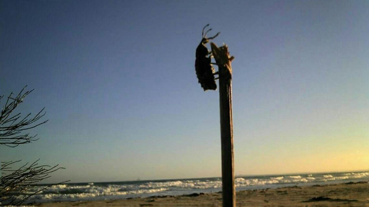 Portland Our Best Pics Nuns Beach On The Beach Beach Bug