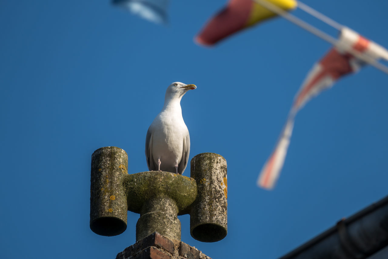 Animal Themes Animals In The Wild Bird Blue Day Focus On Foreground Metal No People One Animal Perching Seagull Water Wildlife Wooden Post Zoology First Eyeem Photo