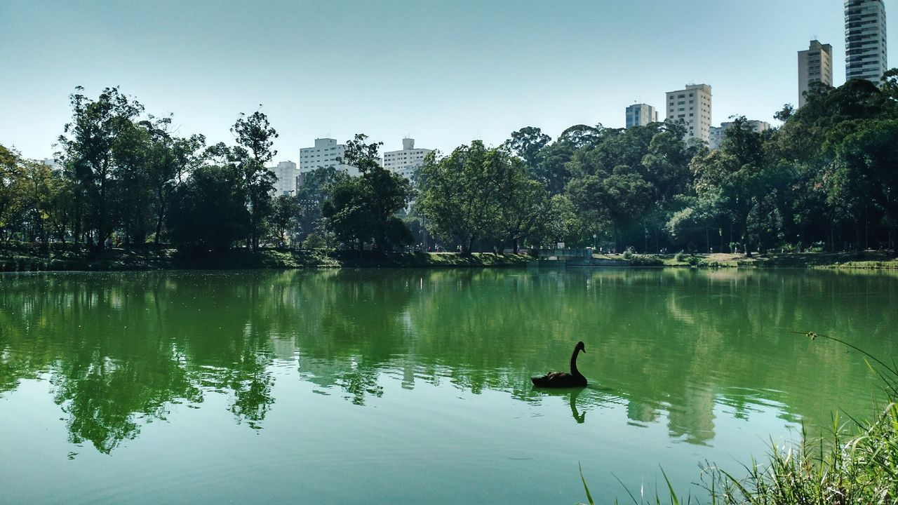Lake Water Tree No People Nature Animal Themes Outdoors Day Sky Plant Beauty In Nature Tourist Attraction  FamilyTime Postcard Horizon Over Water Blue Tranquil Scene Scenics Tranquility Parqueaclimacao Aclimação São Paulo