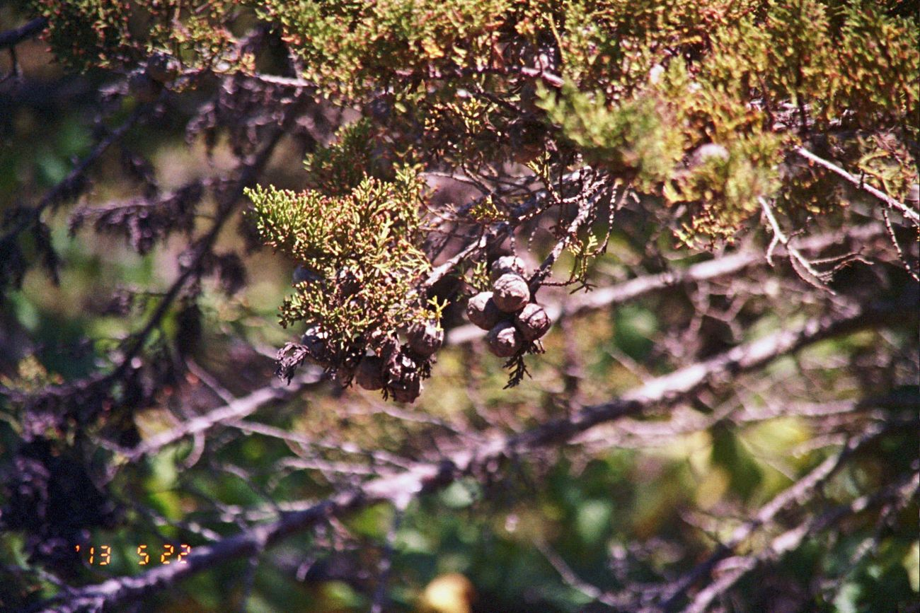 Nature Growth Outdoors Branch Bokehlicious Koduckgirl Olympus Tree Film Date Stamp Carmel Highlands 2013