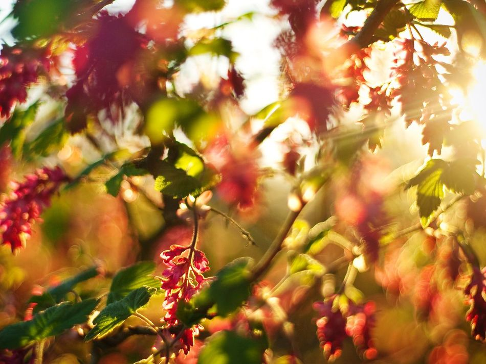 Flower Leaf Nature Outdoors Plant Multi Colored Natural Parkland Beauty Sunlight Springtime Red Scenics Beauty In Nature Denmark Sunlit
