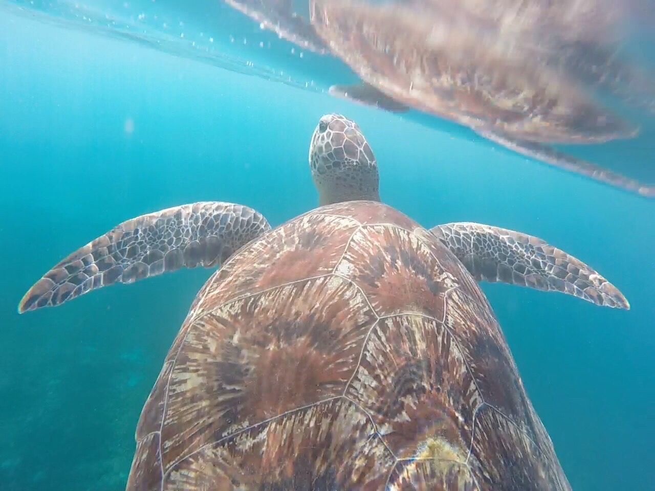 Travel Destinations Martinique Underwater Turtle Animal Themes Sea Life Sea Swimming One Animal UnderSea Animals In The Wild Nature Water Reptile Animal Wildlife Sea Turtle Close-up Scuba Diving Day No People Outdoors https://youtu.be/2fYSAutD-zU