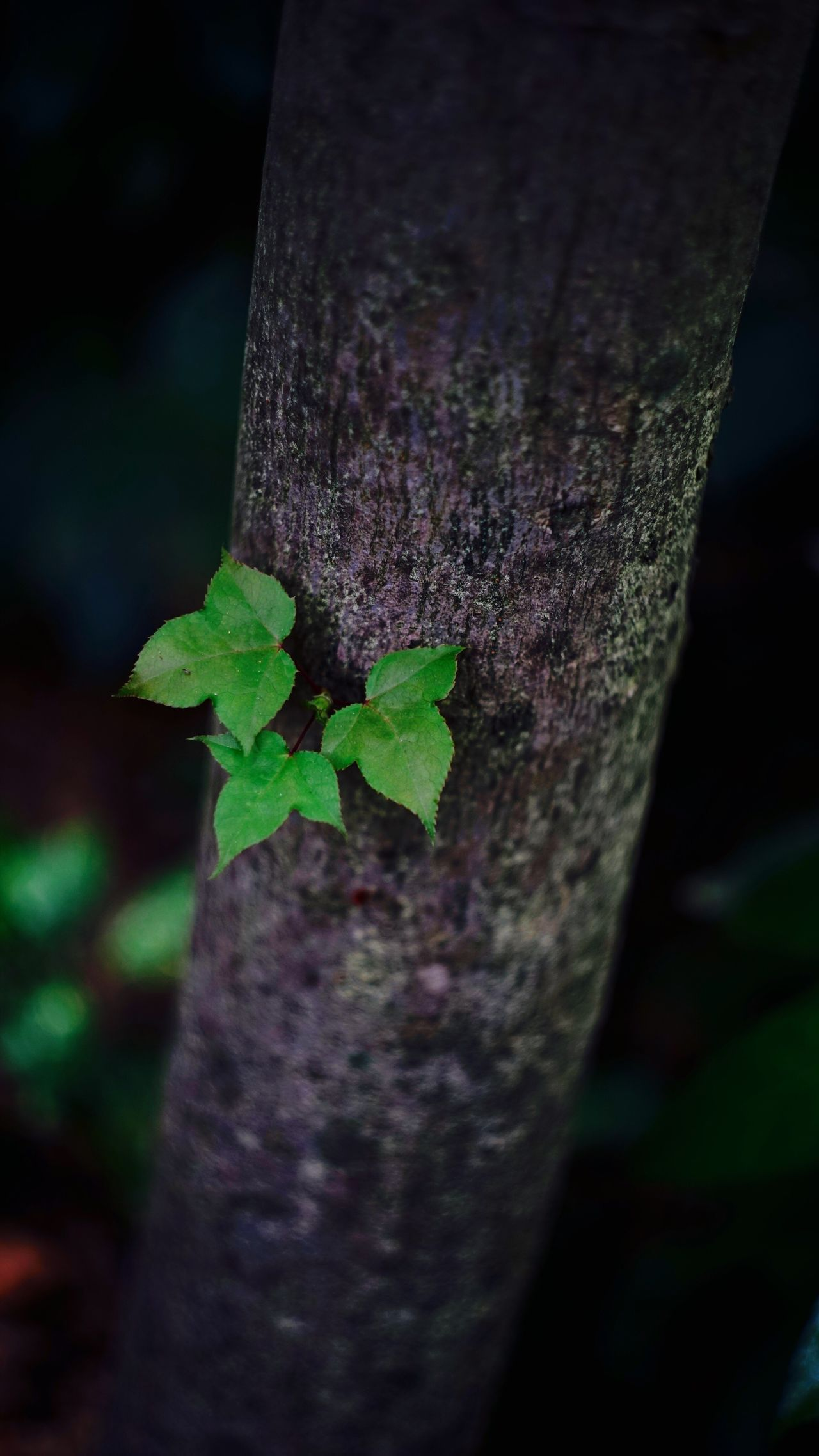 Close-up Tree Trunk Nature No People Leaf Growth Outdoors Green Color Focus On Foreground Tree Beauty In Nature Animal Themes