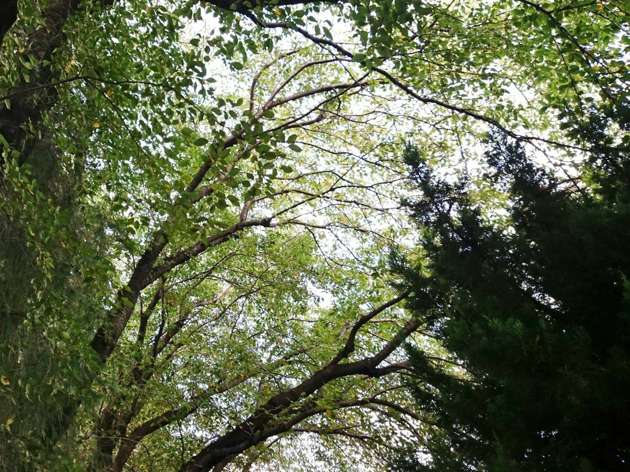 tree, nature, low angle view, growth, branch, beauty in nature, day, tranquility, outdoors, no people, forest, freshness, sky