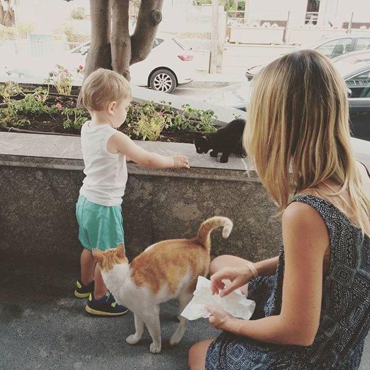 Wurst gemopst und Hotelkatzen gefüttert Catcontent Holidays Balearislands Canpicafort
