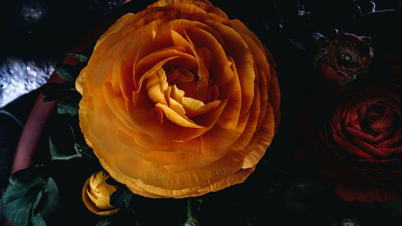Flower Nature No People Beauty In Nature Flower Photography Collore Giallo Wellow