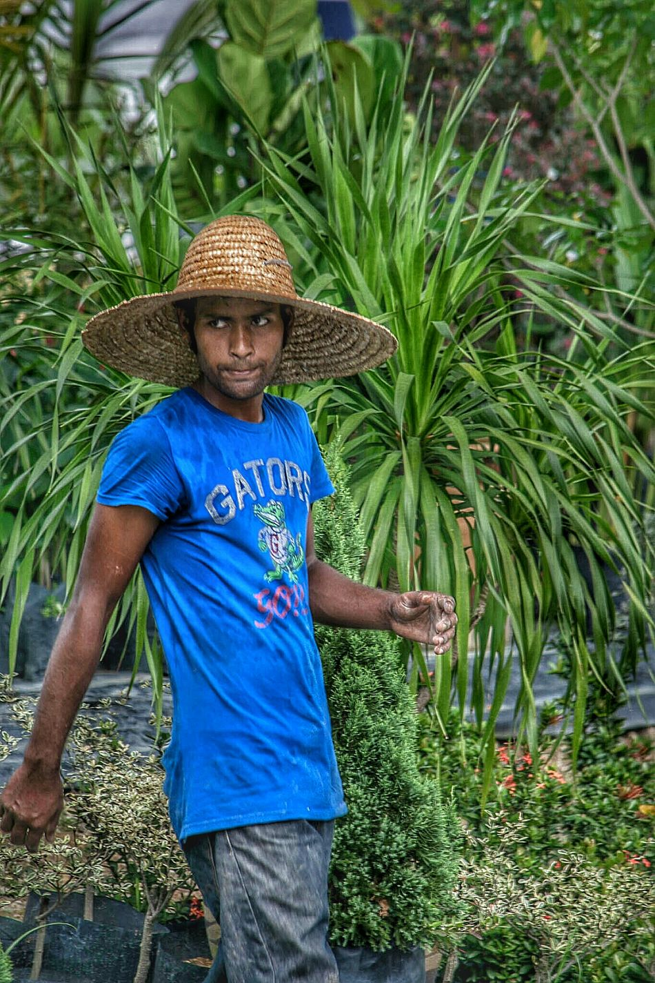 Gardener Blue Hat Straw Leaves Random People Photography Malaysia Outside Colors People Watching Person Working Gardening Worker Sun Hat Sombrero Straw Hat Hats Sungai Buloh Flower Grower Horticulturist Looking To The Other Side