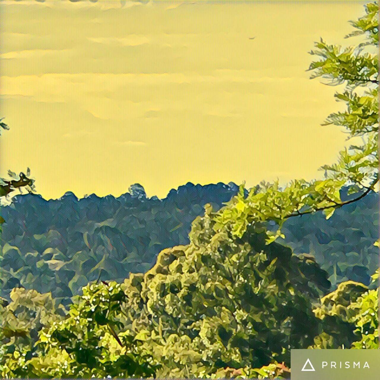 Tree Art 🍃🌳🌲🍂 Tree Trees Nature Skies Prisma Art 🍃🌳🌲🍂