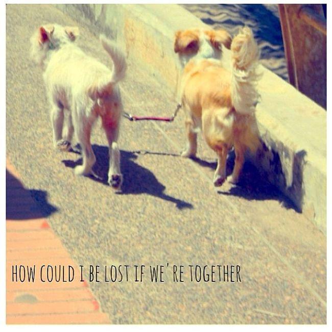 Hadto Adorbs Together PuppyLove lovers instagood cuties imachild saturday notcatsaturday