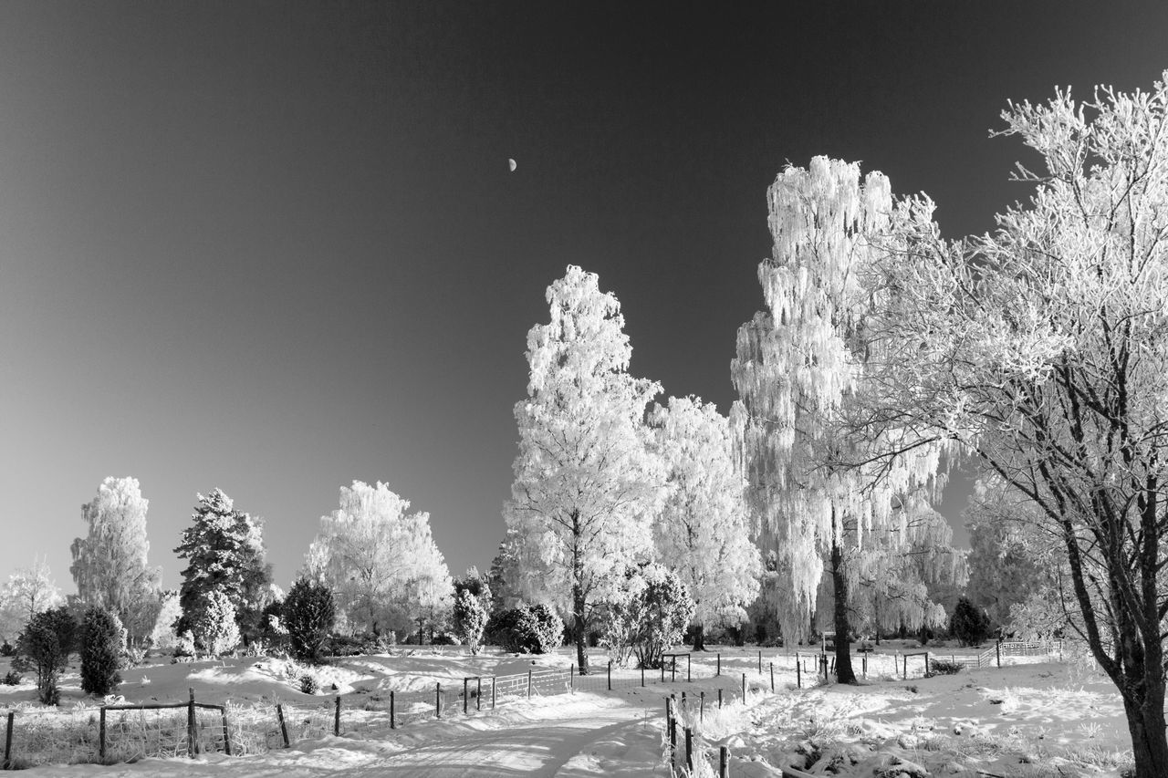 Winter landscape (bnw version) - Tree Nature Clear Sky Beauty In Nature Tranquility Tranquil Scene Scenics Branch Winter Snow The Way Forward Monochrome Photography Monochrome Hello World First Eyeem Photo Exceptional Photographs Blackandwhite Black And White Black & White The Week Of Eyeem EyeEm Masterclass EyeEm Best Shots - Black + White Cold Temperature Idyllic Eye4photography
