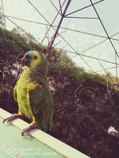 Bird Animal Wildlife Animal Themes One Animal Birdcage Nature Animals In The Wild Close-up Beauty In Nature No People Parrot Animal Representation Green Color Nature