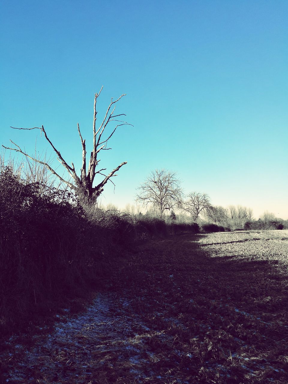 bare tree, tranquility, tranquil scene, clear sky, nature, tree, landscape, beauty in nature, outdoors, scenics, no people, blue, day, plant, branch, sky