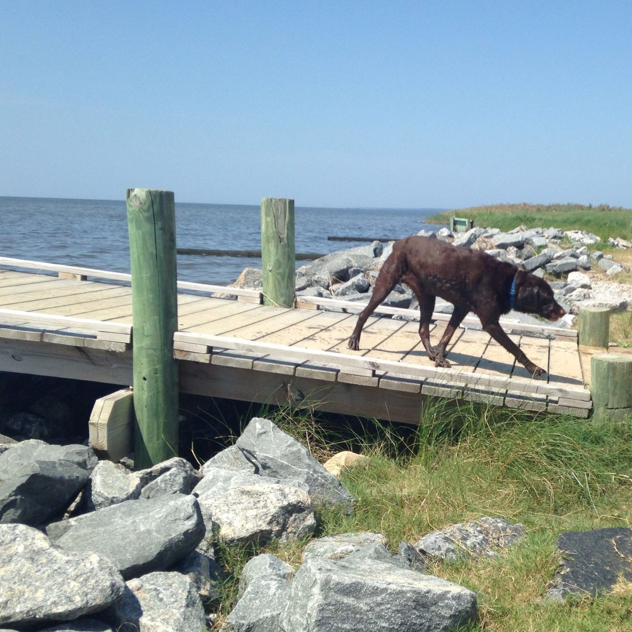 Strolling the dock. Enjoying Life Mydog Vacation OBX14