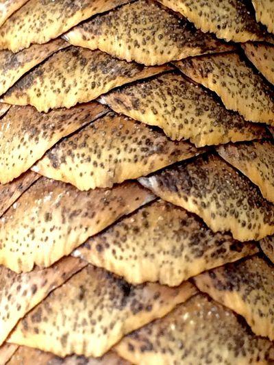Pattern Pieces Pinecone First Eyeem Photo