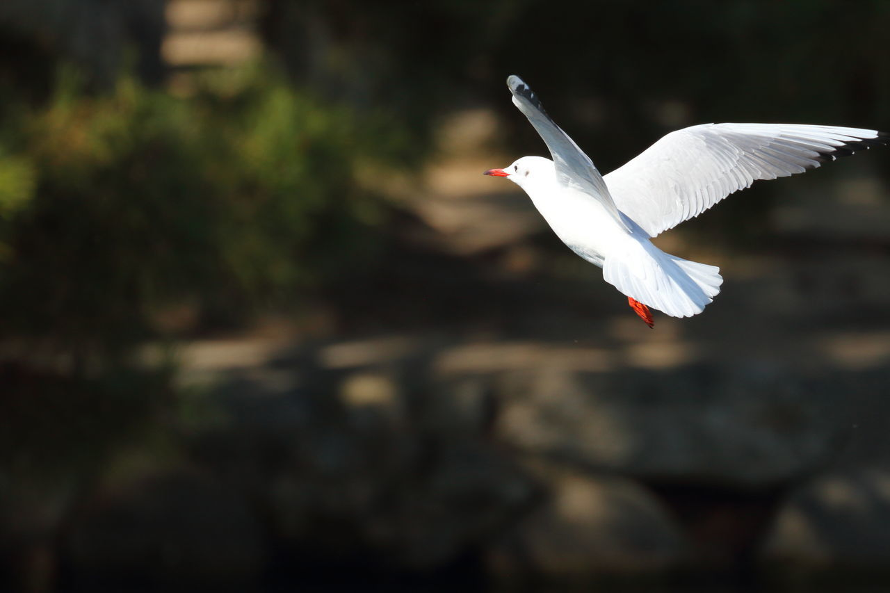 大量アップ・・・人( ̄ω ̄;) スマヌ Bird Bird Photography Bird Watching Birds Birds Of EyeEm  Birds_collection Birds🐦⛅ Birdwatching Black-headed Gull Day EyeEm EyeEm Best Shots EyeEm Best Shots - Nature EyeEm Gallery EyeEm Nature Lover EyeEmBestPics Eyeemphotography Hello World No People Outdoors Seagull Seagulls Taking Photos Taking Pictures 鳥撮り部♪
