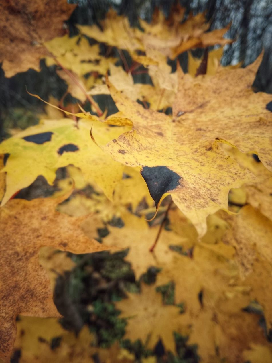 Autumn Finland Autumn Leaf Nature Beauty In Nature Morningjog