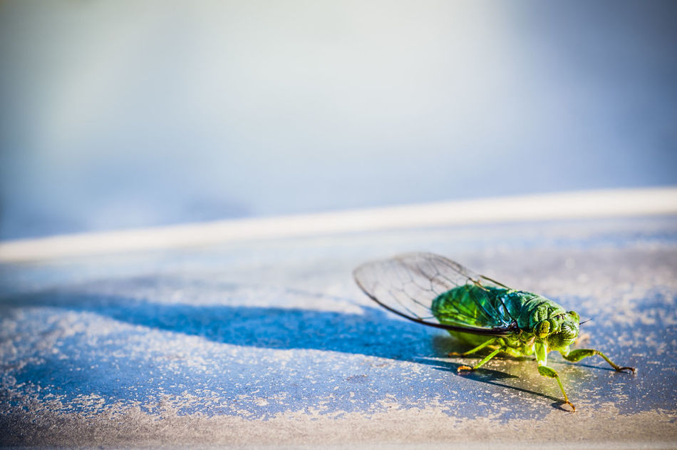 Beautiful stock photos of insects, Animal Themes, Animal Wing, Animals In The Wild, Betong