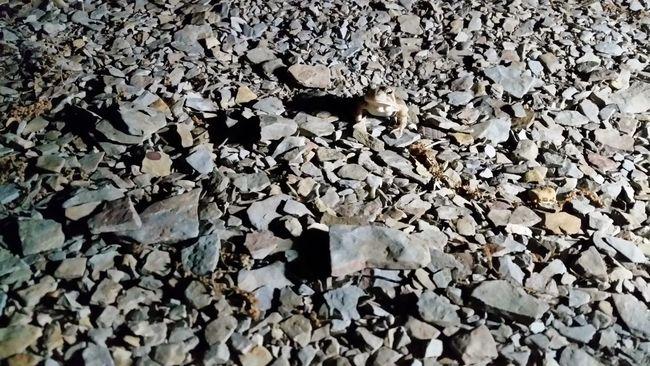 Pattern Pieces Tennessee Dale Hollow Lake Frog Slate Rock Limestone