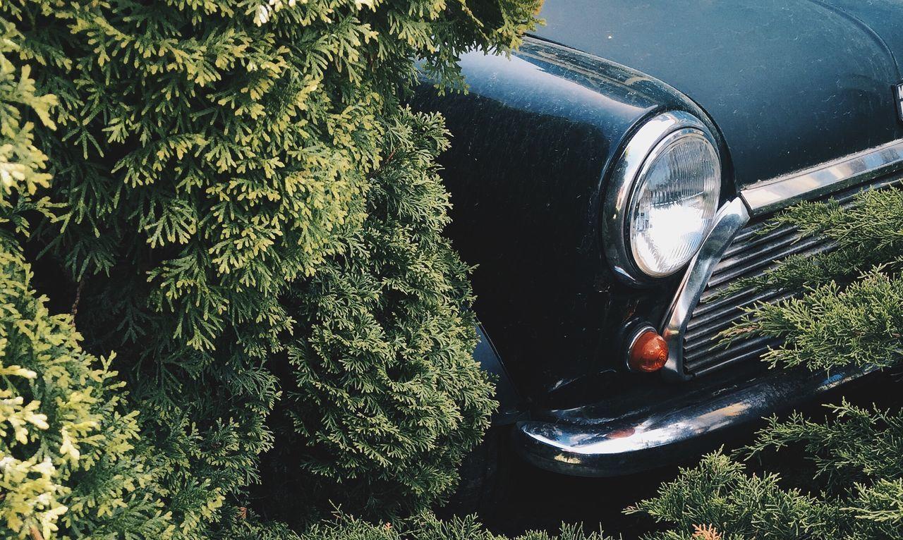 Beautiful stock photos of cool car, Bush, Car, Cropped, Day