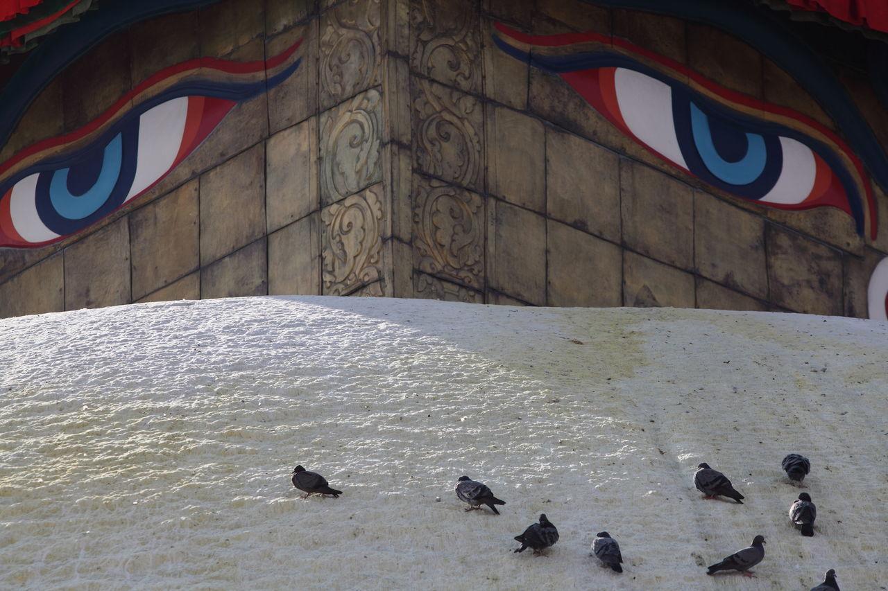 ASIA Asian Culture Buddha Buddhist Temple Eyes Of Buddha Eyes Watching You Famous Place Kathmandu Pigeon Place Of Worship Sacred Place Spirituality Stupa The Street Photographer - 2016 EyeEm Awards