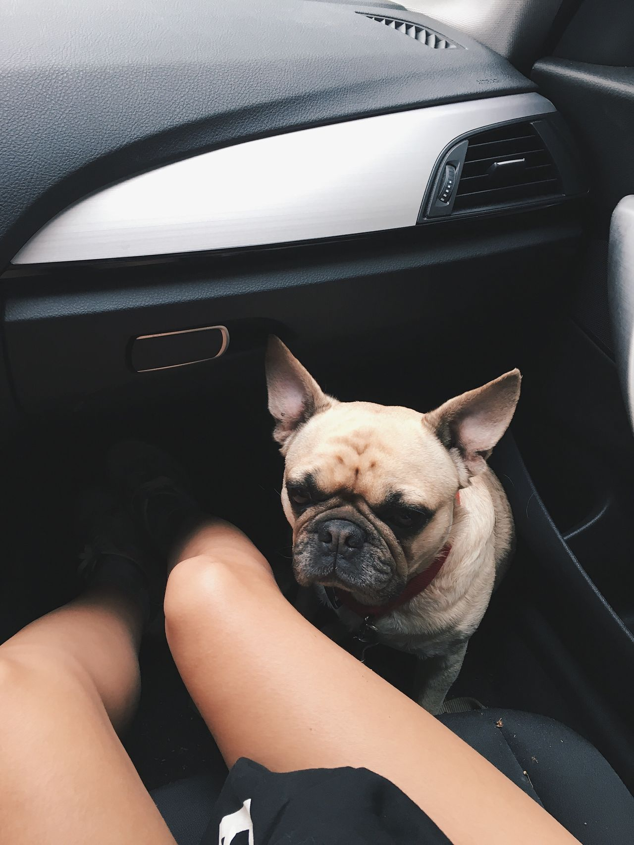 Dog Car Interior Car Vehicle Interior Transportation Mammal Mode Of Transport One Animal Domestic Animals Pets Animal Themes Human Body Part Legs