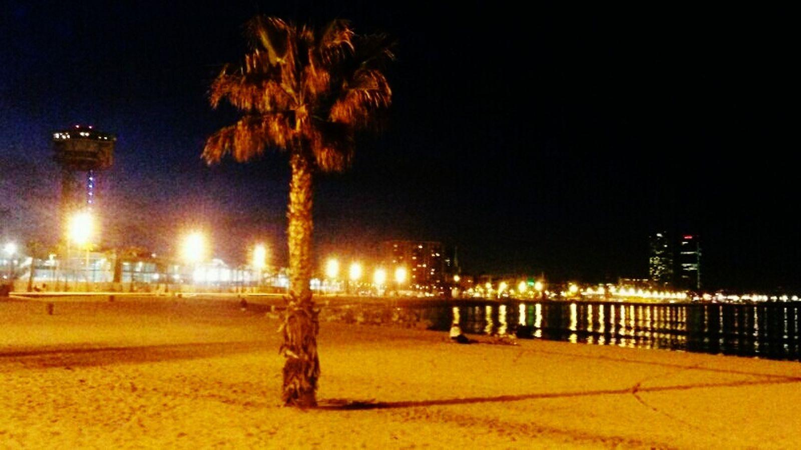 Urban Escape Oasis Urbanphotography Urban Oasis Barcelona♡♥♡♥♡ Barcelonalove Barceloneta Palm Trees My Running View Thebcnpost