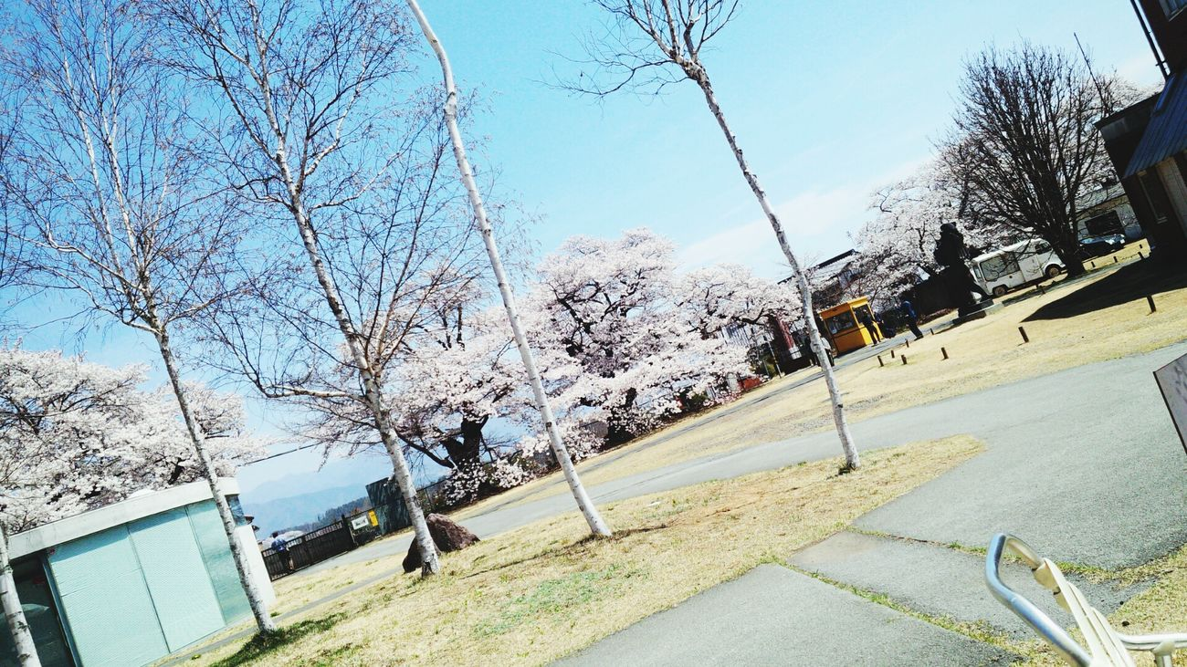 My Life Art MAHORAWORLD Sakura