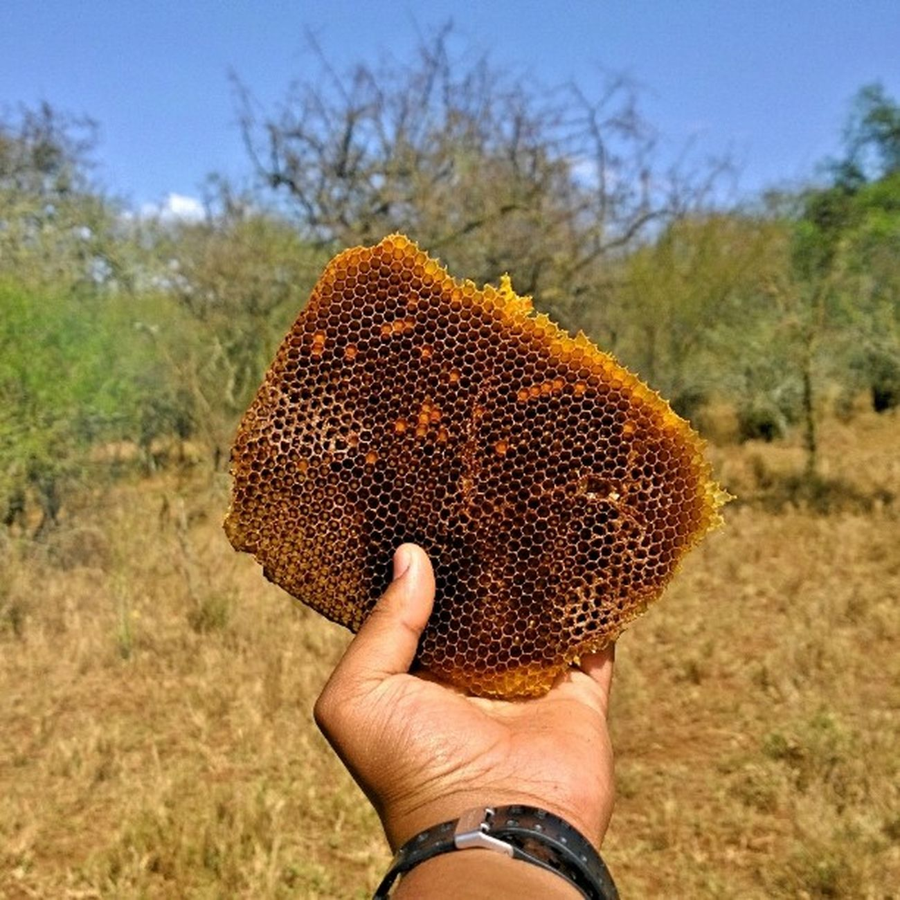 Followthehoneycomb Honey Farming Design bee architecture sweet farmlife farmersdelight crisp nokia1020 creativestudio statigram webstagram