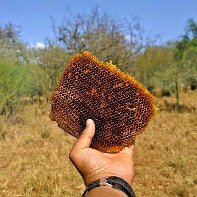 Followthehoneycomb Honey Farming Design bee architecture sweet farmlife farmersdelight crisp nokia1020 creativestudio statigram webstagram