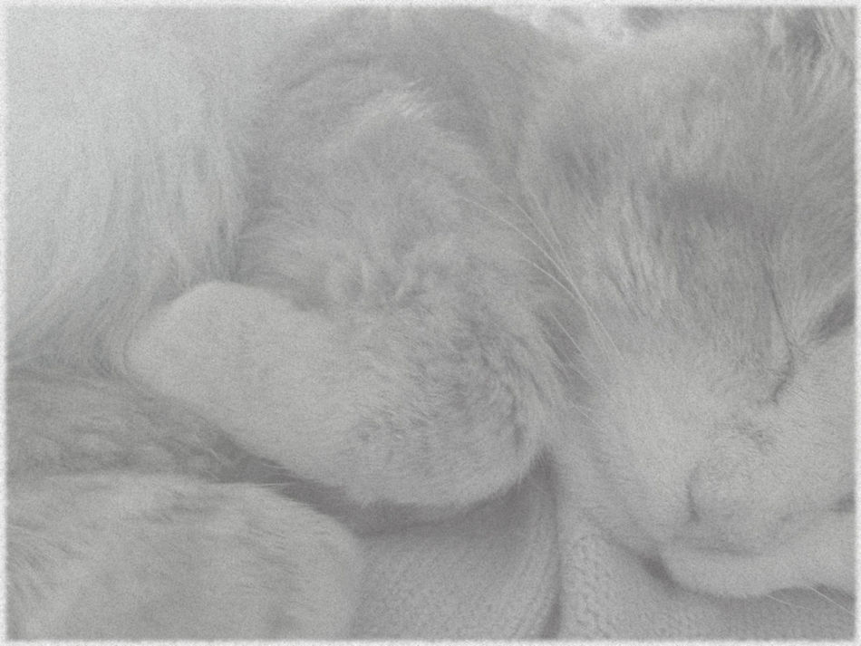 Soft kitty, warm kitty Cat Close-up Domestic Animals Domestic Cat Eyes Closed  Fur Home Indoors  Nature Relaxation Resting Sensuality Sleeping Softness Showing Imperfection