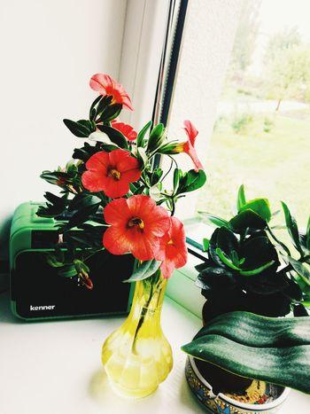 Flower Vase Window Indoors  Table Home Interior Plant