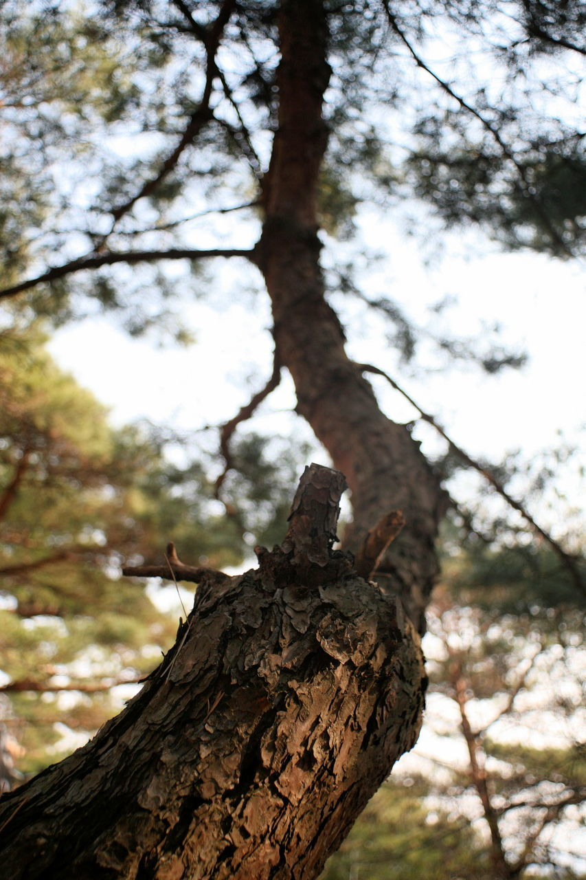 tree, tree trunk, branch, focus on foreground, nature, day, low angle view, outdoors, animals in the wild, bark, wood - material, no people, growth, one animal, perching, animal themes, animal wildlife, beauty in nature, sky, dead tree, bird, close-up