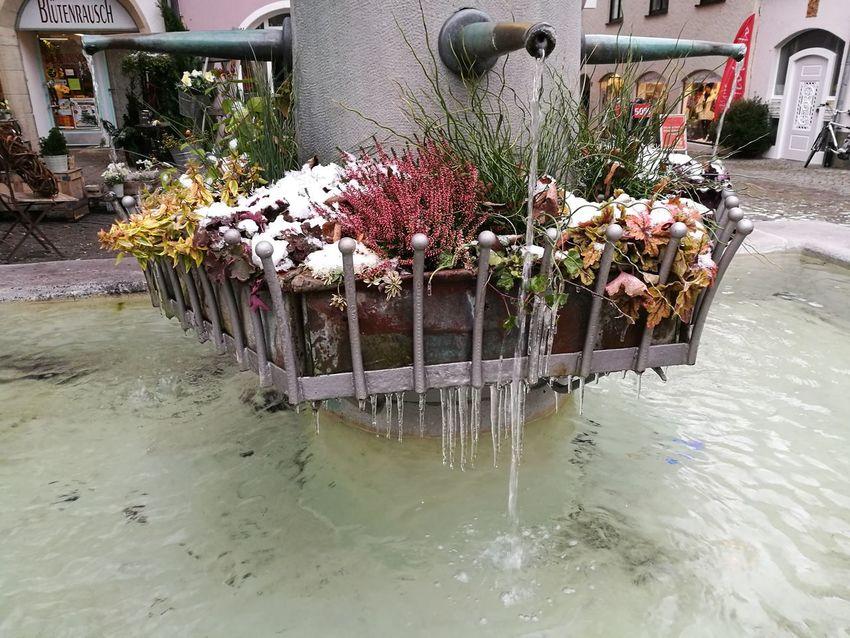 Flower Water Plant Ice Überlingen