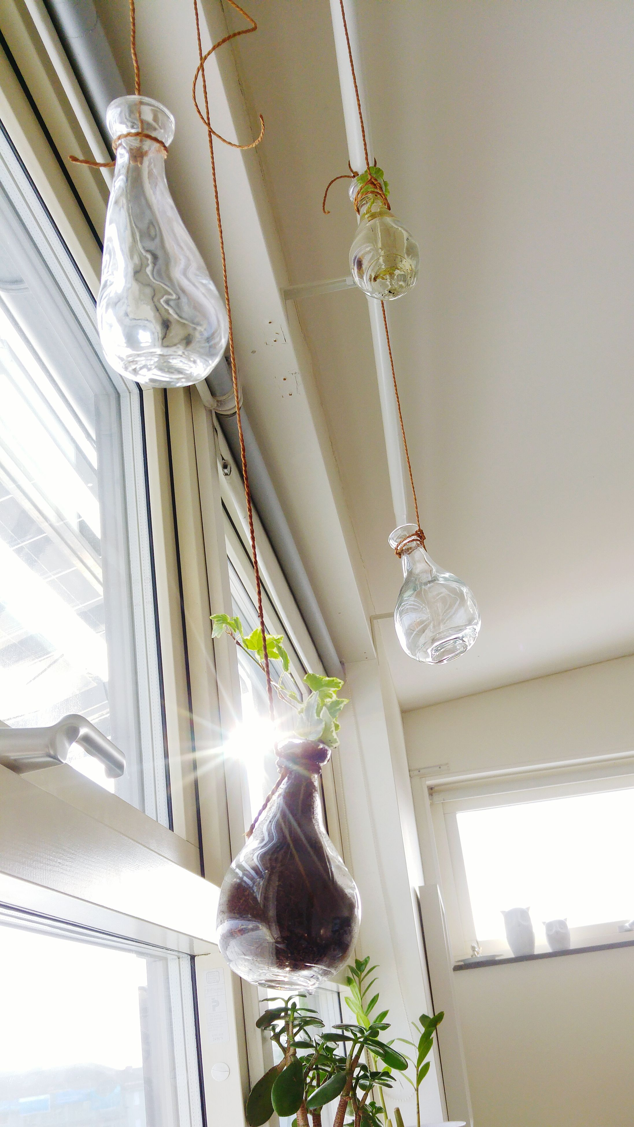 hanging, indoors, ceiling, home interior, no people, low angle view, orchid, built structure, architecture, day, illuminated, wind chime, christmas ornament, nature