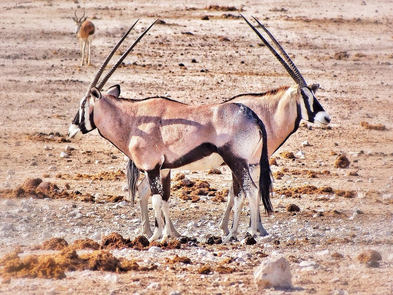 Side view of two horned animals on landscape