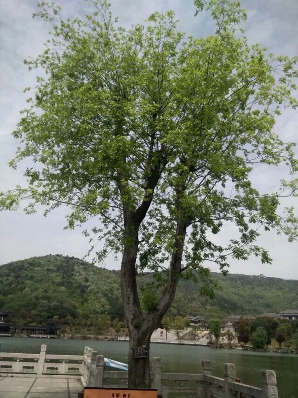 tree, growth, nature, no people, day, sky, scenics, outdoors, beauty in nature, branch