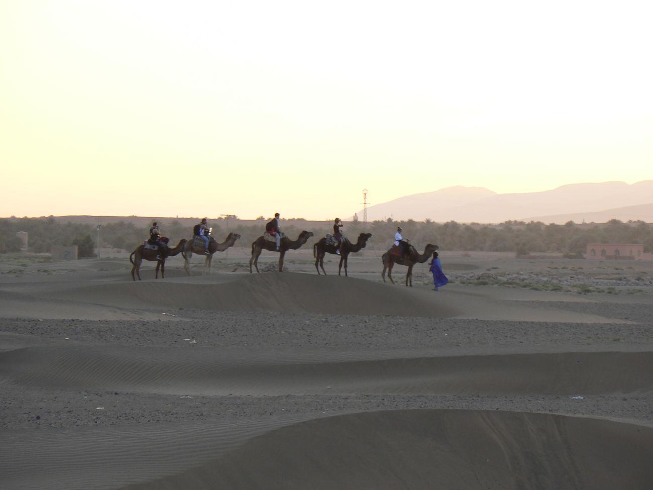Camel Desert Marocco Nature Non-urban Scene Person Tourism Tranquil Scene Zagora Desert