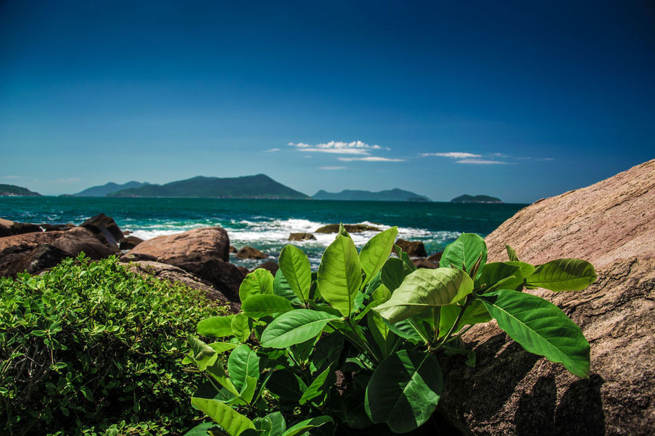 Beauty In Nature Blue Day Green Color Growth Leaf Mountain Nature No People Outdoors Plant Scenics Sea Sky Sunlight Tranquility Water