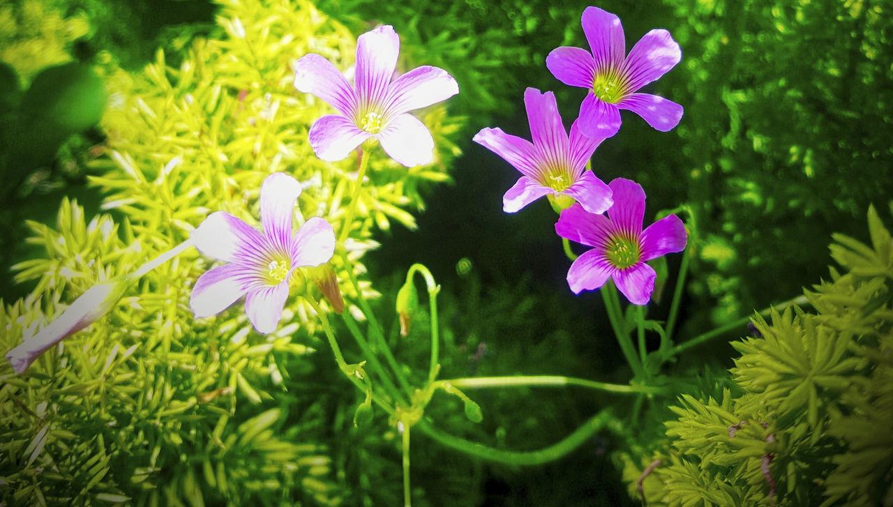 Flower Green Color Green Foliage Lush Foliage Outdoors Purple