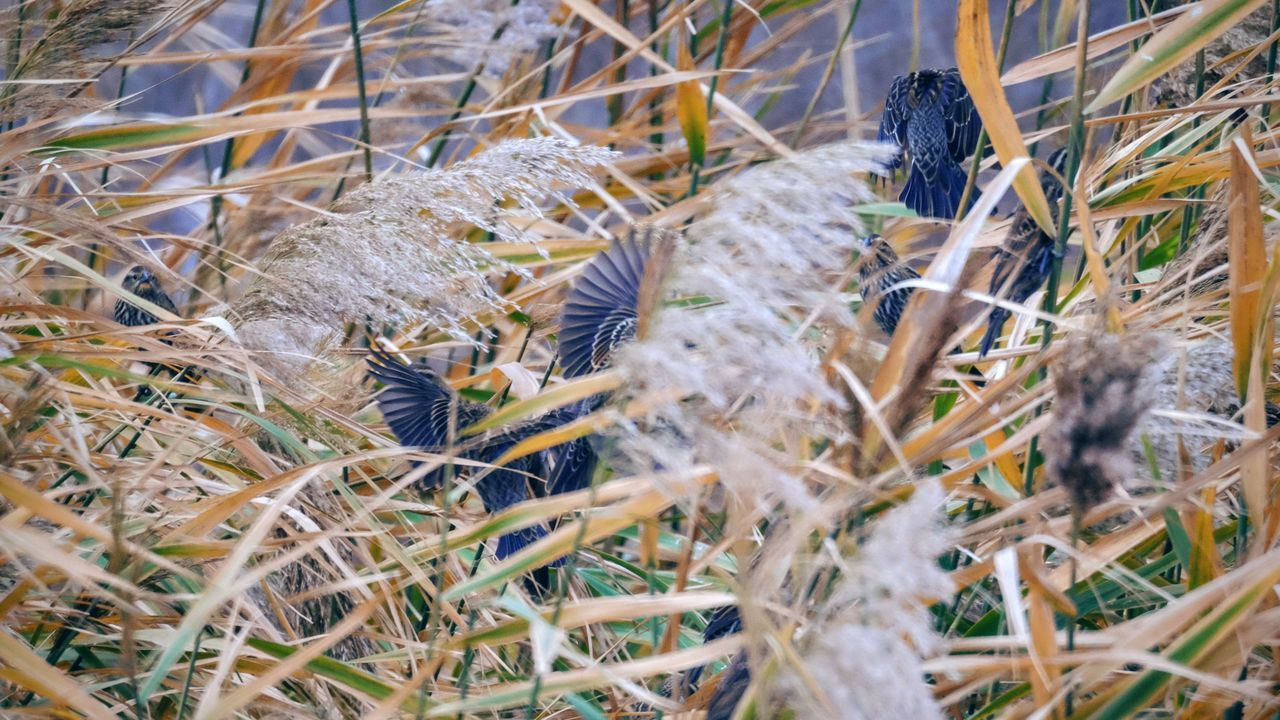 Photo essay - A day in the life. Platte River Grand Island, Nebraska November 6, 2016 A Day In The Life America Animals In The Wild Bird Photography Camera Work Close-up Eye Em Nature Lover Eye For Photography Grass Growth MidWest Nature Nebraska Nikkor 500mm F8 No People On The Road Outdoors Photo Diary Photo Essay Road Trip Sparrows Storytelling Travel Photography Vesper Sparrow Visual Journal