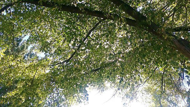 Local park Tree Greeenery Taking Photos Beautiful Day
