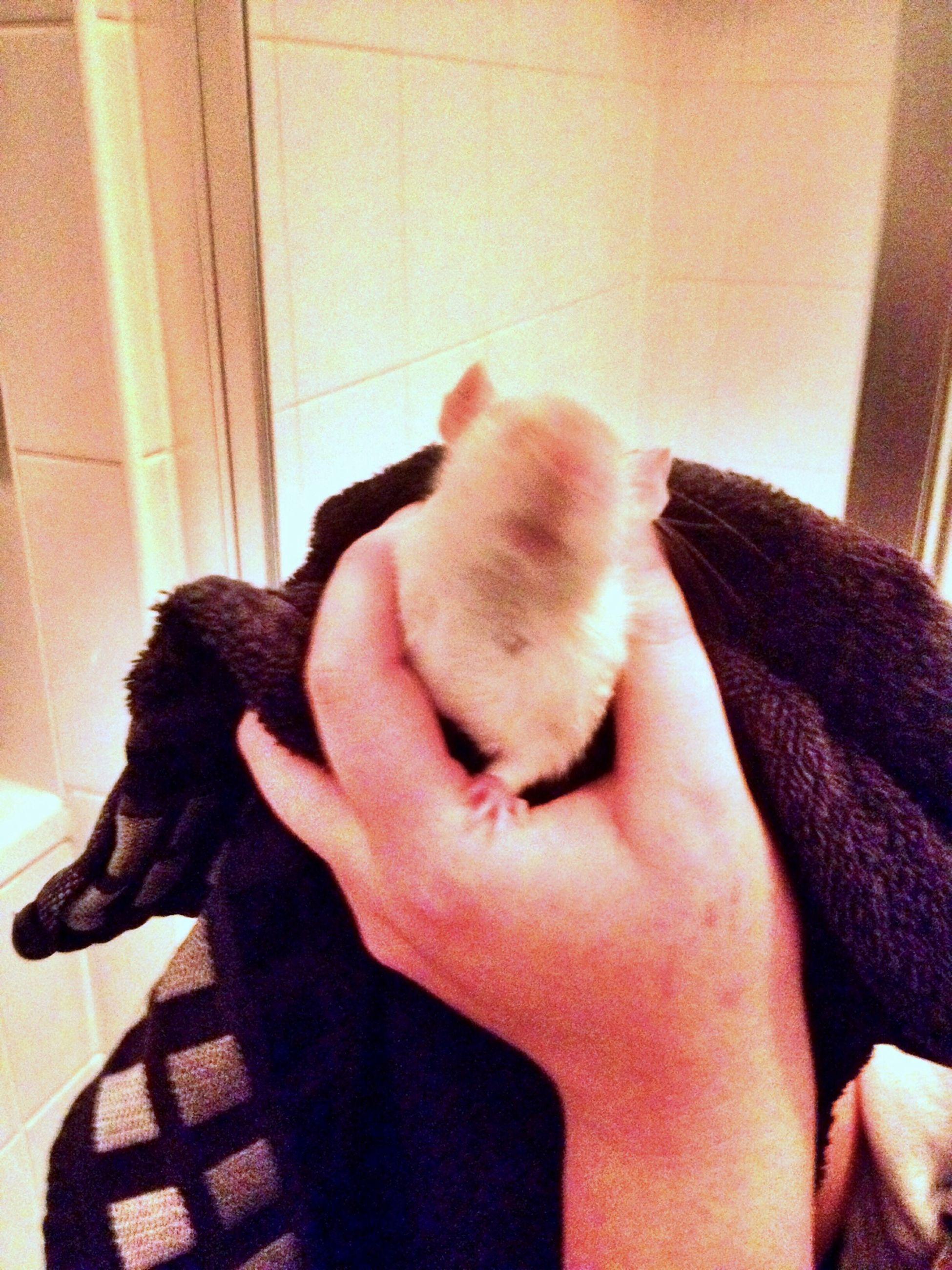 Derp Face Derp Clean Rats