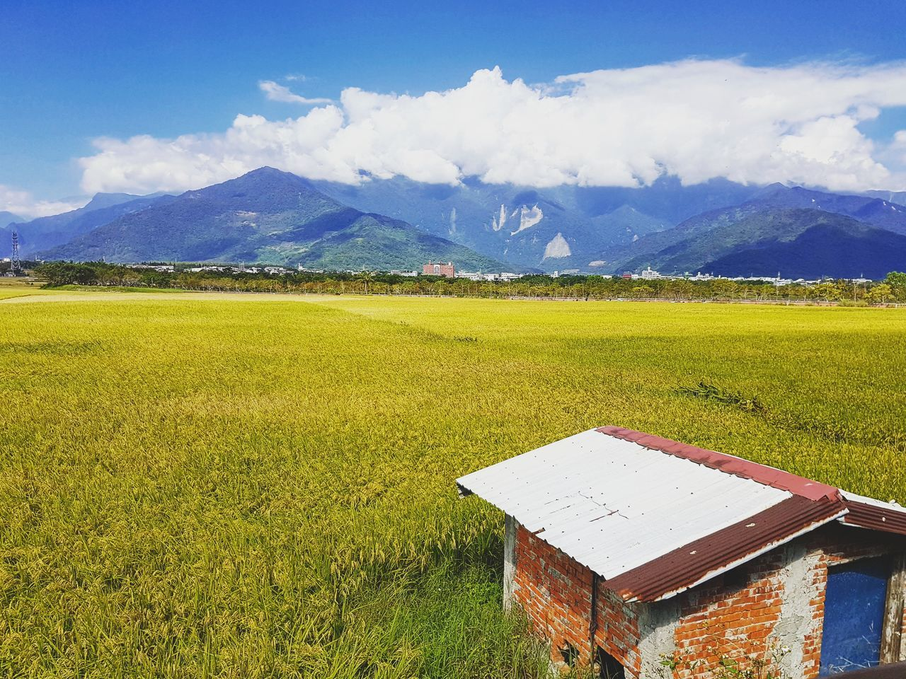 Taitung,taiwan Nature Photography Taiwan Blue Quiet Moments Photo Travel Endless Photography Cloud Sky Flower Field Tranquility The Way Forward Nature Landscape Beauty In Nature Rural Scene Cloud - Sky Agriculture Road Yellow Taitung Beyond