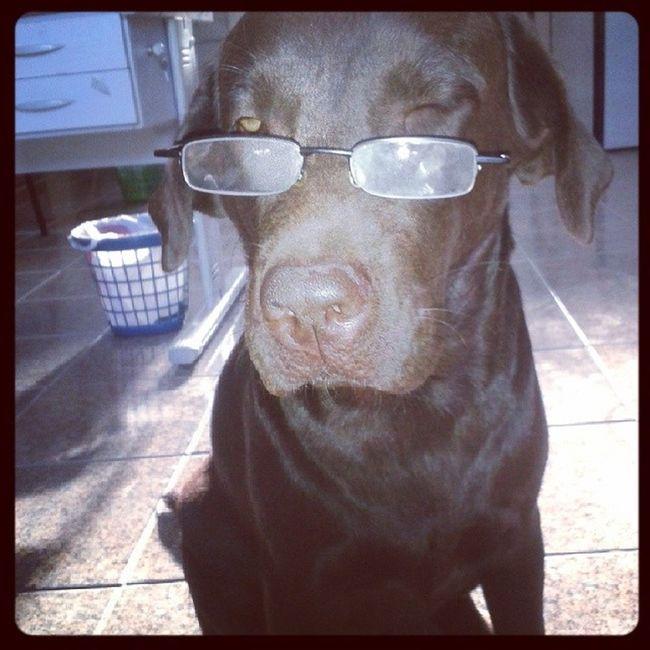 Chega de trabalho por hj! Haha... Caopanheirolabra Dogs Labradores Labsofinsta amigade4patas amorincondicional