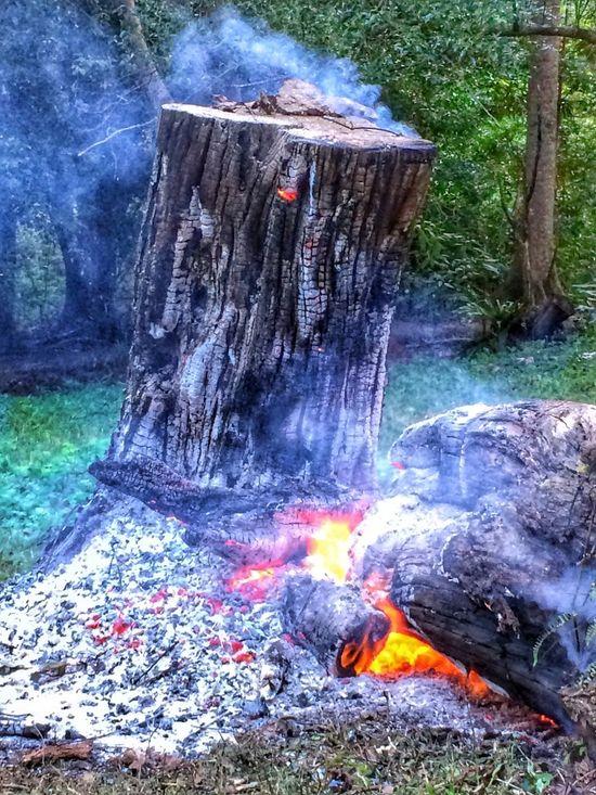 Fire Hot @IPSWebsite BURN! Flame Ashes Log Tree Stump