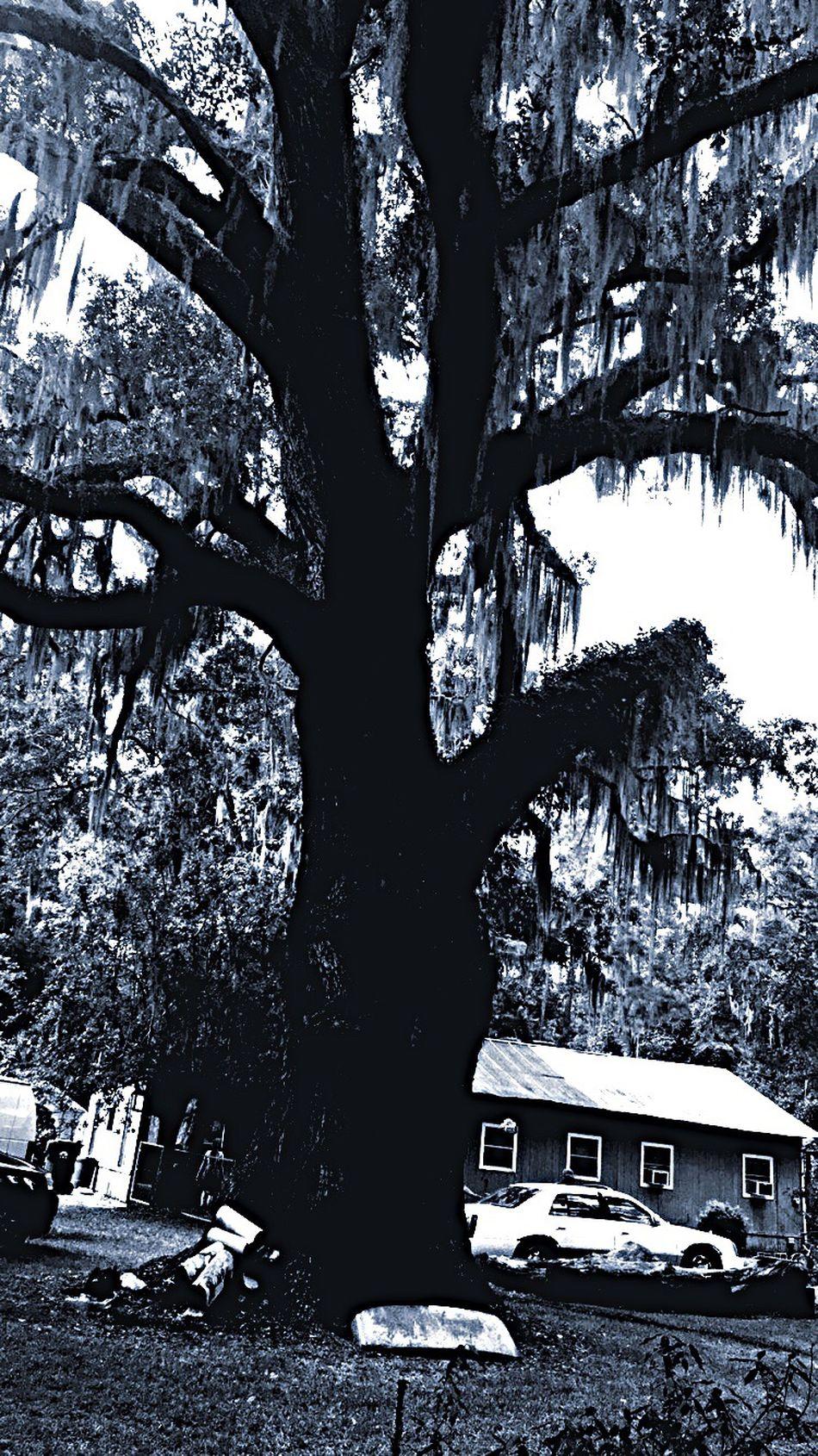 WhatABeauty Treephotography NaturalBeauty Naturephotosnow Nature Natural Ilovetrees Bigandbeautiful Country Onafarm Georgia Checkitout Eyeemphotography Eyeemtrees Treelovers Connected