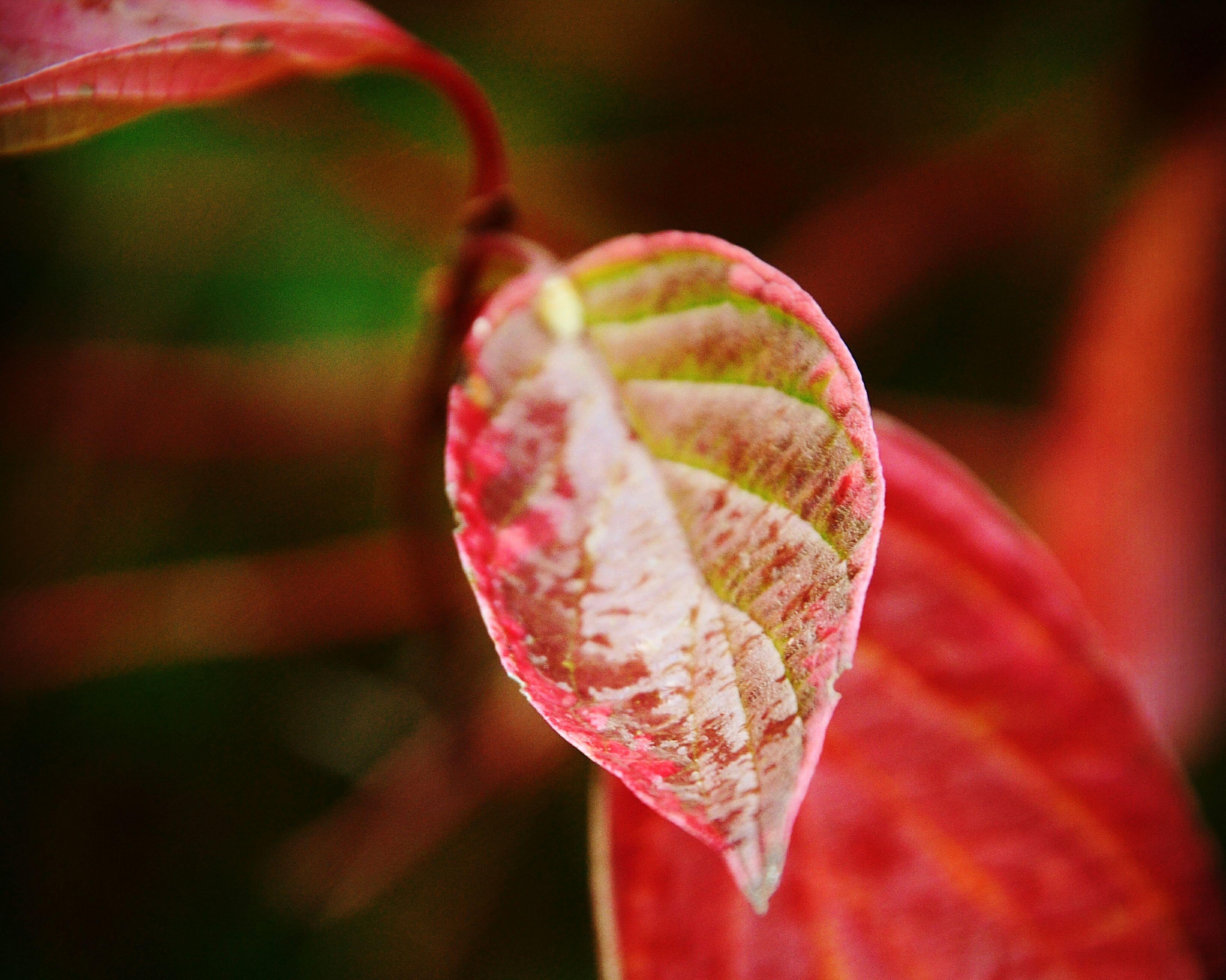 Pflanze  Pflanzen Am Wegesrand Nature